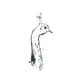 peacock head (black and white)