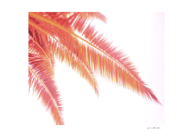 Rose gold sunset palm leaves