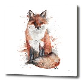 Fox - Wildlife Collection