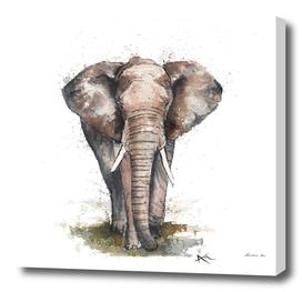 Elephant - Wildlife Collection