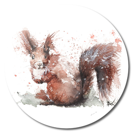 Squirrel - Wildlife Collection
