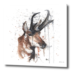 Red Deer - Wildlife Collection