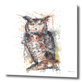 Owl - Wildlife Collection