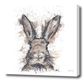 Rabbit - Wildlife Collection