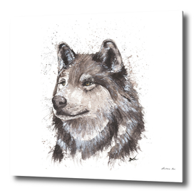 Wolf - Wildlife Collection