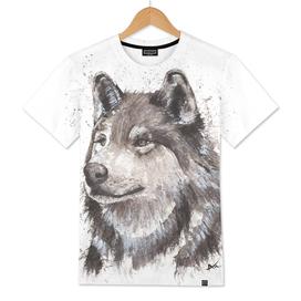 Wolf - Wildlife Collection