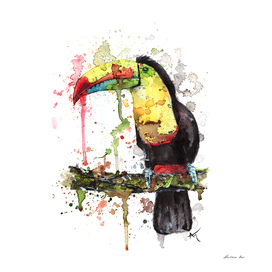 Toucan - Wildlife Collection