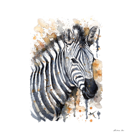 Zebra - Wildlife Collection