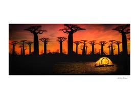 RDP-COMP 550019 Baobab Sunset Grove