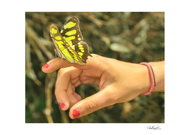 Butterfly Perched on Hand Photo