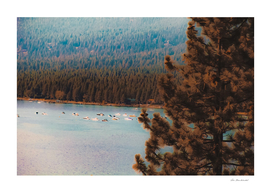 pine tree and boats on the water at Lake Tahoe Nevada USA