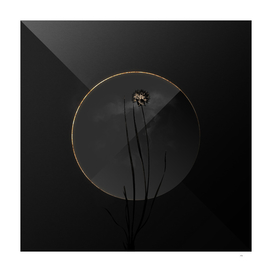 Shadowy Allium Foliosum Botanical on Black and Gold