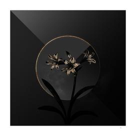 Shadowy Amaryllis Botanical on Black and Gold