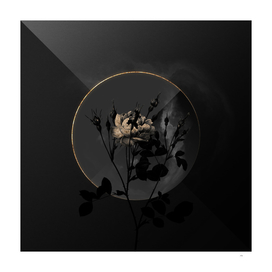 Shadowy Anemone Flowered Sweetbriar Rose Botanical