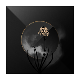 Shadowy Arabian Starflower Botanical on Black and Gold