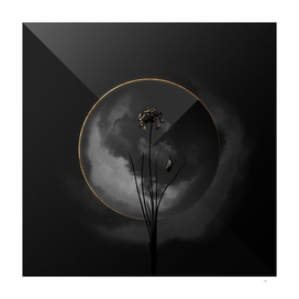 Shadowy Autumn Onion Botanical on Black and Gold