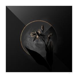 Shadowy Bandana of the Everglades Botanical on Black