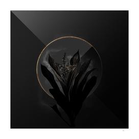 Shadowy Cordyline Fruticosa Botanical on Black and Go
