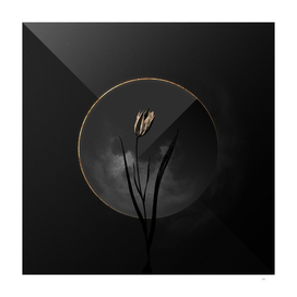 Shadowy Lady Tulip Botanical on Black and Gold
