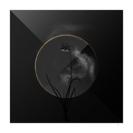 Shadowy Nodding Onion Botanical on Black and Gold