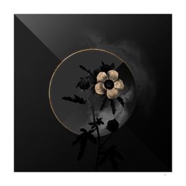 Shadowy Venice Mallow Botanical on Black and Gold