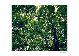 FOLIAGE SERIES Light Through leaves