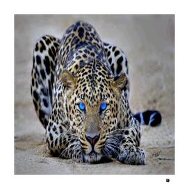 Blueeyes Jaguar