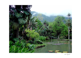 Tropical Forest in Brazil