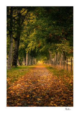 Autumn Alley Road