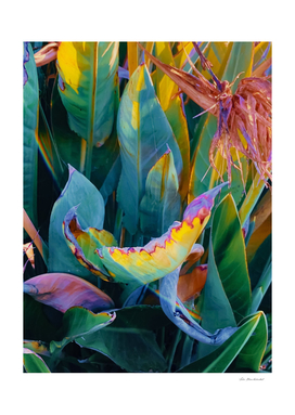 green bird of paradise leaves texture background