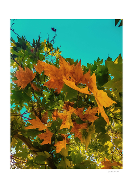 Maple tree branch with orange and green autumn leaves