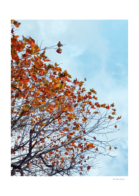 Tree branch with orange autumn leaves and blue cloudy sky