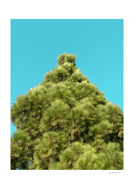 isolated green pine tree with blue sky background