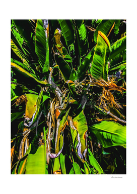 Bird of paradise plant with green leaves background
