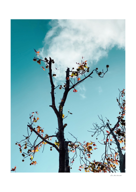 Tree branch and orange autumn leaves with blue sky