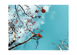 Tree branch with orange autumn leaves and blue sky