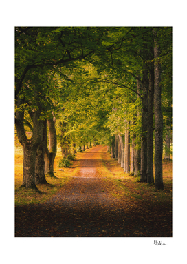 Autumn Morning Alley