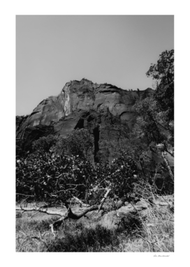 mountain in the forest at Zion national park Utah USA