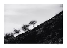 tree on the mountain at California USA in black and white