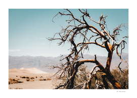 Tree branch in the sand desert and mountain view