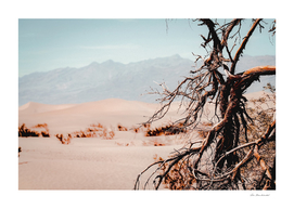 Tree branch with sand desert and mountain view