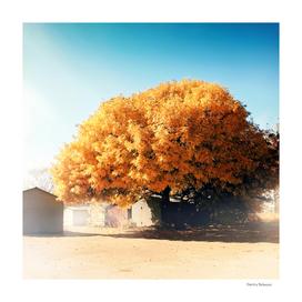 Yggdrasil in autumn