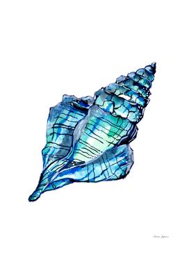 Blue Conch Sea Shell