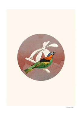 Bird Collage II