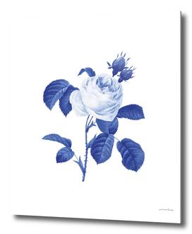 Blue botanic I