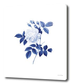 Blue botanic II