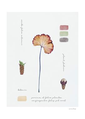 Botanic Notes