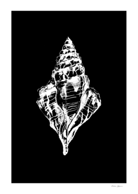 Black and White Conch Seashell