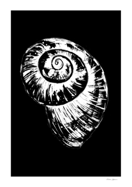 Black and White Spiral Snail Shell
