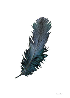 feather! enjoyt he difference